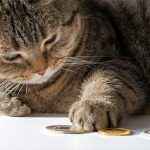 Brown cat lying on its side looking at gold coins. It has one paw and claw on the coins implying clawback